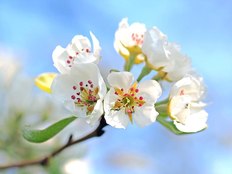 Chránite vašu záhradu pre rizikami?